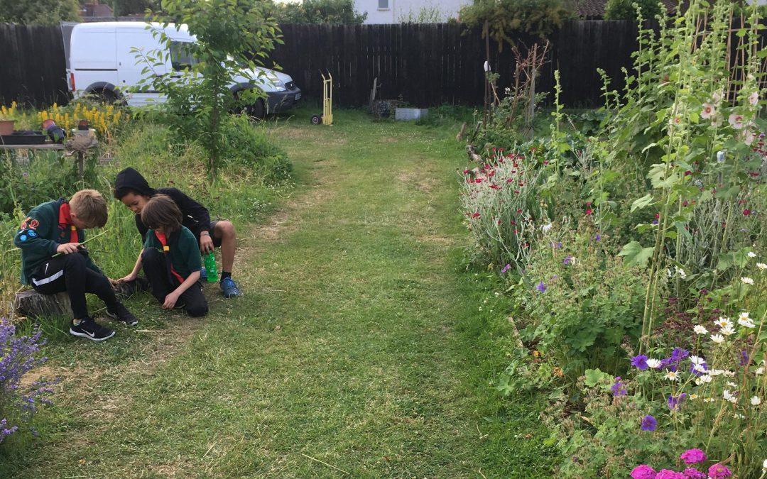 Cubs and Beavers get gardening