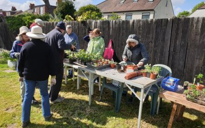 Plant Swap and Tools for Africa, Saturday 4th May