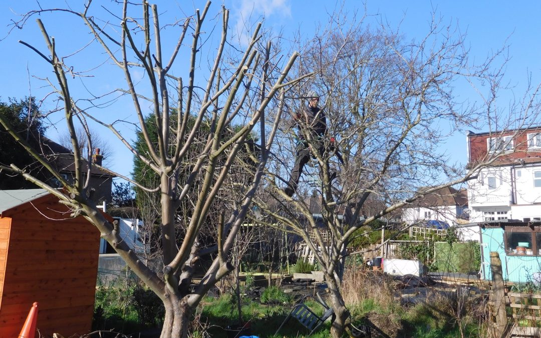 Chop, chop, it's pruning time!